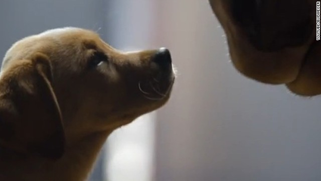 Budweiser's 2014 Super Bowl ad focuses on the friendship between a puppy and its signature Clydesdale.