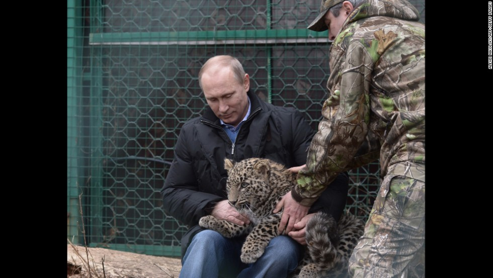 Russian President Vladimir Putin holds a Persian leopard cub at a breeding and rehabilitation center in the Black Sea resort of Sochi. Perhaps the most important vote in Russia's public selection of a new Olympic mascot was cast when Putin said he wanted a funky leopard to represent the 2014 Sochi Winter Games. Browse through for more photos of Putin trying his hand at different activities.
