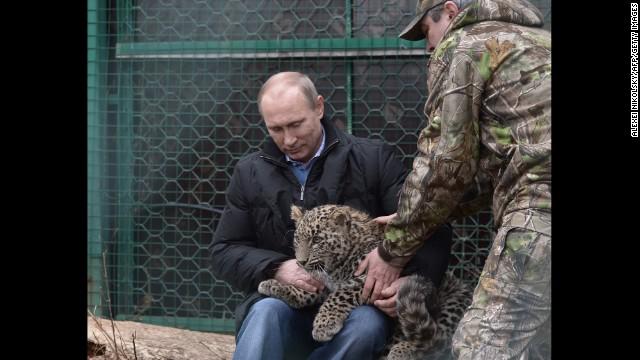 140204133630-01-vladimir-putin-cult-0204-story-top jpgVladimir Putin Hunting Tiger