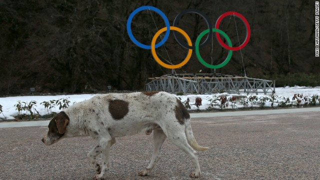 This dog has the posture of an animal that looks less than impressed by the impending start of the Winter Olympics. <a href='http://edition.cnn.com/2014/02/05/world/europe/russia-sochi-stray-dogs/index.html?hpt=hp_t2'>In the countdown to the Winter Games, Russian animal rights activists have accused city authorities of ramping up a campaign to exterminate street dogs through the use of poison.</a>