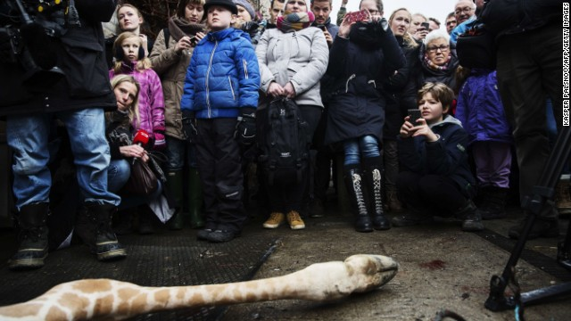 Visitors to the zoo watch as the giraffe is autopsied and butchered.