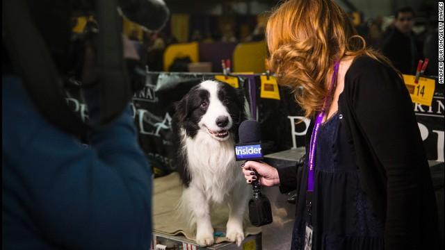 A woman interviews a dog February 10.