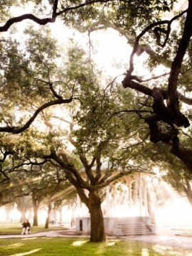 Historic neighborhoods, Lowcountry cuisine and a blossoming arts scene make Charleston a hit for lovers of the South.