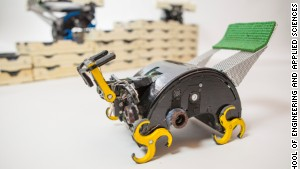 Insect-inspired robots could build for us