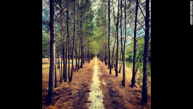 Some of the most memorable pictures can be those you stumble upon when exploring a less frequented area. In Thailand, I turned my back on the beach one afternoon and found this enticing alley of trees.
