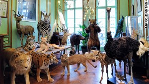 Quirky boutiques -- such as Paris taxidermists Deyrolle -- remain a French specialty.
