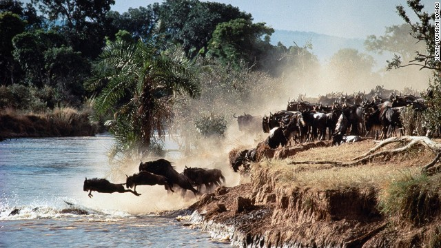 Poaching, war and deforestation threaten magnificent sights such as the annual pilgrimage of wildebeest across the African savannah.