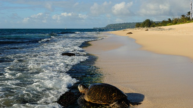 Intense egg collection, fisheries bycatch and light pollution have forced species such as the leatherback, hawksbill and green turtles onto endangered lists.