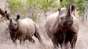 Minus rhinos, Big Five will become Big Four.
