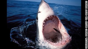 Odds of shark death: 1 in 3,700,000. (Photo by: Universal Images Group via Getty Images)