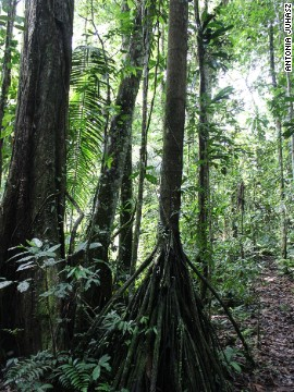 Ecuador's Napo region, including the Yasuni, is now one of the 14 major deforested areas in the world. Ecuador has the highest deforestation rate of any Latin American country, in part because oil is located so deep within the forest that extensive systems of roads must be built to reach it.