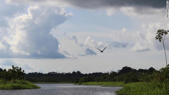 """Dr. Matt Filner, a research biologist with the Amazon Conservation Association, says Yasuni """"is about the only spot on earth where you get this maximum diversity for everything."""""""
