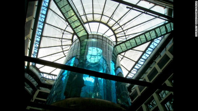 The elevator at the AquaDom in Berlin travels up the middle of the 82-foot tall aquarium.