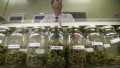 Doctor: Weed is not a 'gateway drug'