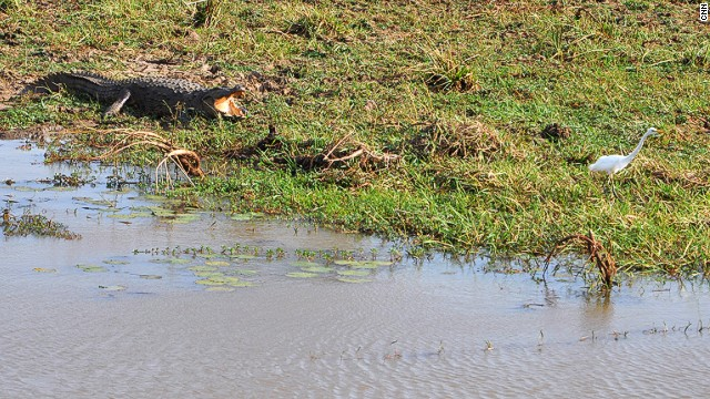 Yala National Park is home to the largest population of mugger crocodile in Asia.