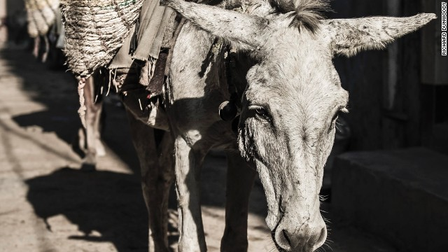 A tired working donkey carrying construction materials in a slum in Delhi, India.