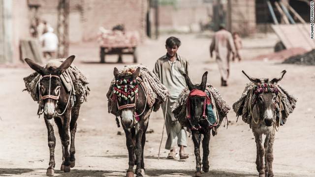 Working donkeys at a brick kiln in Gujranwala in Pakistan. The owners take great pride in them, often adorning their bridles with tassels and cloths.
