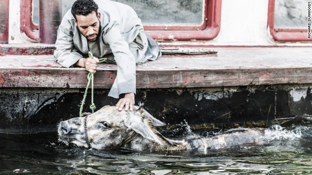 A carriage driver washes his mule's head in the Nile from a riverboat in Egypt. Tourism is not quite so buoyant in Luxor and drivers are finding it extremely hard to make a living.