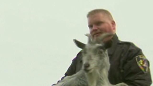 Volunteers Help Farm Animals