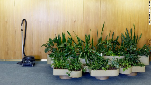 <strong>Plants in your home</strong><!-- --> </br><!-- --> </br>Mold is a common household allergen. But while most people make sure to clean the bathroom and check the basement, they forget about their indoor plants, Bennett says. Mold can form on leaves or in overwatered soil, releasing mold spores into the air. If you're allergic to mold, inhaling these spores can lead to trouble breathing, coughing and eye/throat irritation. <!-- --><!-- --> </br></br> To prevent mold from forming in the first place, keep a thin layer of gravel at the bottom of every potted plant to help with drainage, and place plants in well-ventilated areas.