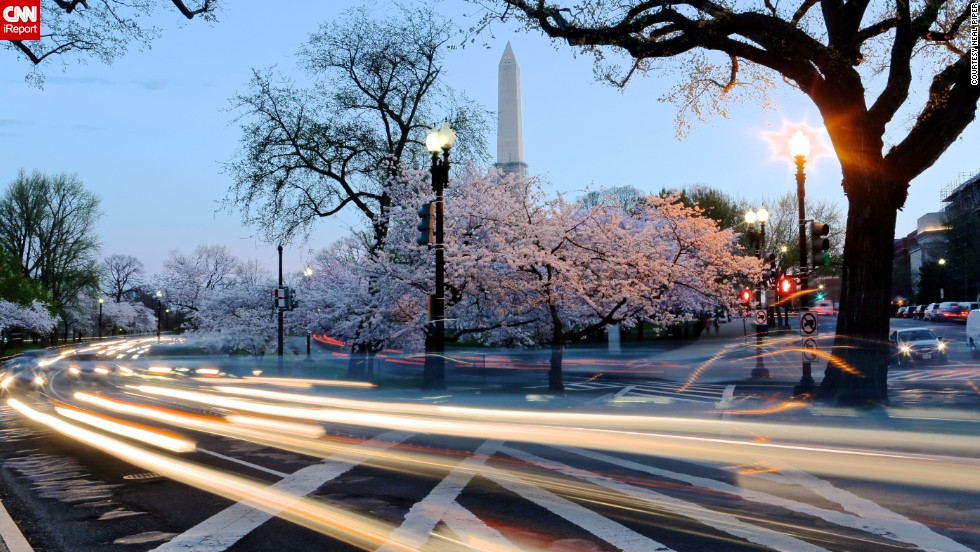 The National Cherry Blossom Festival starts on March 20 in Washington. Every year millions of pink petals transform the city's landscape, beckoning the start of spring. If you can't make a trip to the capital to see these delicate flowers bloom, enjoy their beauty through these photos taken over the years by <a href='http://ireport.cnn.com/docs/DOC-955495'>CNN iReporters</a>.