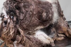 El cambio extremo de un perro vagabundo
