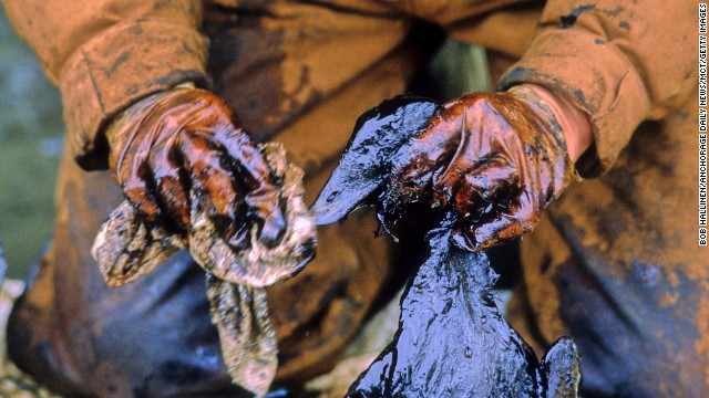 An Exxon Valdez oil spill worker recovers and cleans a bird covered in crude oil. At least 1,000 ducks and 250,000 seabirds were killed by Exxon Valdez crude oil, according to studies.