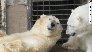 Wang (left) and GeeBee had spent their days together since they were cubs. GeeBee died of a heart attack.