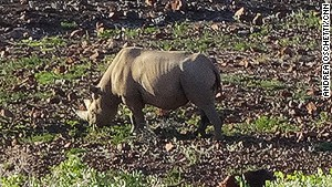 When tracking black rhino, it\'s important to view them from a respectful distance.