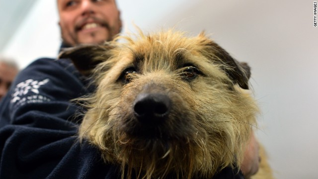 "The dogs have traveled for two days, but have been described by a Human Society International (HSI) employee as ""the sweetest, most interactive, very friendly dogs."""