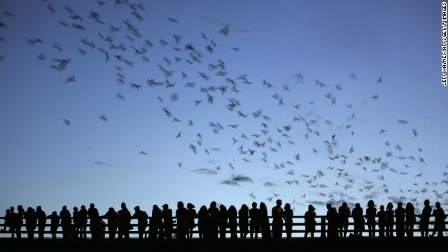 The Ann Richards Congress Avenue Bridge in Austin, Texas, draws locals and tourists to see the <a href='http://www.batcon.org/index.php/get-involved/visit-a-bat-location/congress-avenue-bridge/subcategory.html' target='_blank'>largest urban bat colony</a> in North America. Nearly 1.5 million Mexican free-tailed bats take up residence underneath the bridge in the spring and summer. Kids love a good, somewhat creepy, air show.