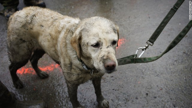 Tryon, a rescue dog muddied from the day's work, stands with his handler March 30 near the west side of the landslide.