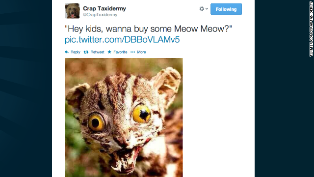 This was the first post from Nish's popular Twitter feed, @CrapTaxidermy. Meow isn't this nice?