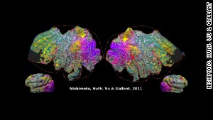 In this illustration, where there are similar colors, those brain regions respond similarly to movie clips, Jack Gallant\'s lab showed.