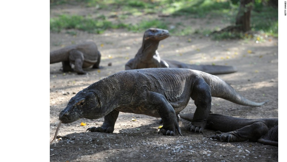 9 criaturas 'míticas'