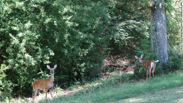 "The bald eagles may be the star attraction at Bear Trace at Harrison Bay, but other wildlife is also flourishing, like these deer. ""We are trying to show that golf courses can be a sustainable habitat for wildlife,"" Carter says."