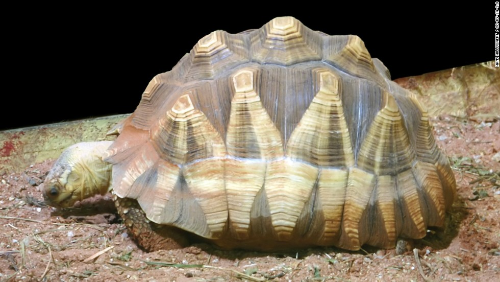 Tortuga de Madagascar