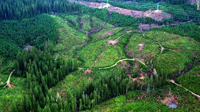 Logging roads wind through sections of clear-cut timber in the Mt. Hood National Forest, east of Portland, Oregon, another state where a majority of its land is public.