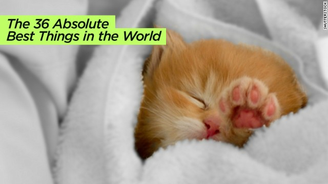 "Somehow, kittens are not on <a href='http://www.buzzfeed.com/mjs538/absolute-best-things-in-the-world' target='_blank'>this list</a>, also by BuzzFeed. But ""sleeping with your pet"" is."