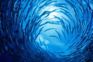 Tornado de peces