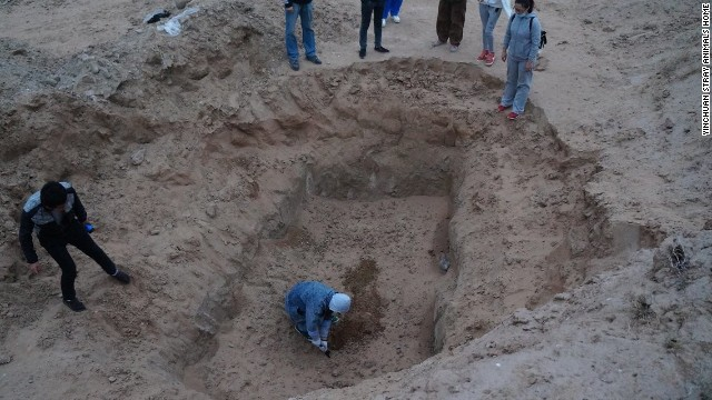 A group attempts to dig into a pit where up to 100 stray dogs were seen trapped earlier. Volunteers at the Yinchuan Stray Animals Home suspect someone filled the pit with soil, burying the dogs alive.