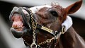 California Chrome a 'rock star'