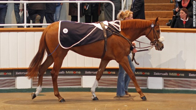 Lot 99 at the Craven Breeze Up Sale pleases her owner, who is looking to make a profit having purchased the filly a year earlier.