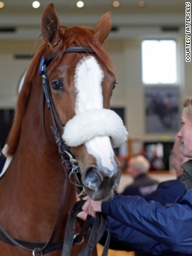 The two-year-old chestnut filly was given a run of 600 meters to persuade potential buyers she has a future as a racehorse.