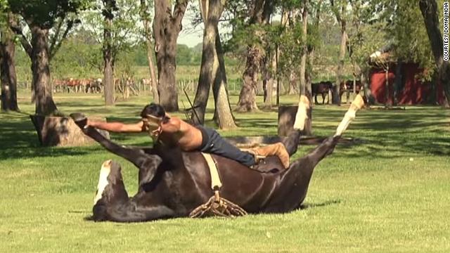 'Yoga de caballos': la filosofía de Doma India