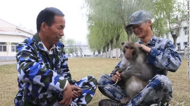 """The monkeys are loyal bodyguards who defend the safety of our comrades."""