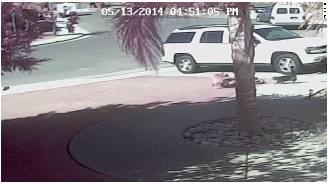 Un gato salva a un niño del ataque de un perro