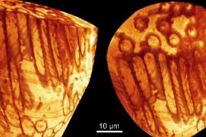El esperma más antiguo del mundo