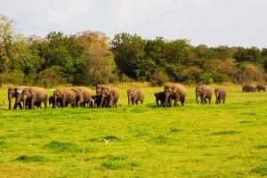 Parque Nacional Minneriya, Sri Lanka