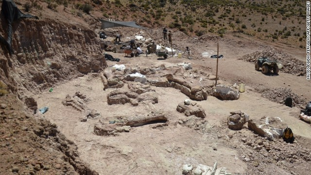 The paleontologists who made the discovery believe it to be a new species of Titanosaur, a long-necked, long-tailed sauropod that walked on four legs and lived around 95 million years ago during the Cretaceous Period.